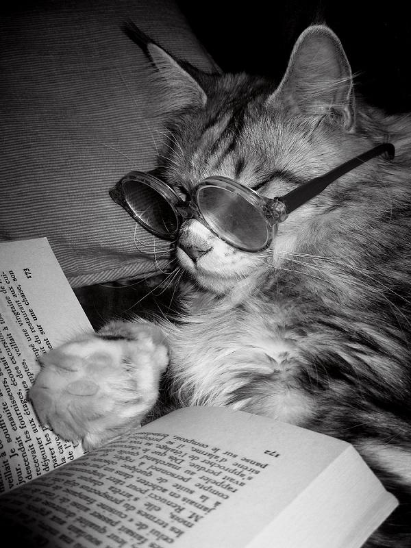 cat reading 12