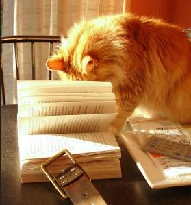 cat reading 14
