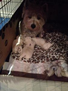 Pippa and her babies