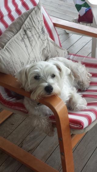 Daisy on chair