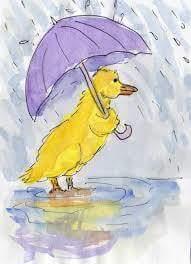 duck in rain