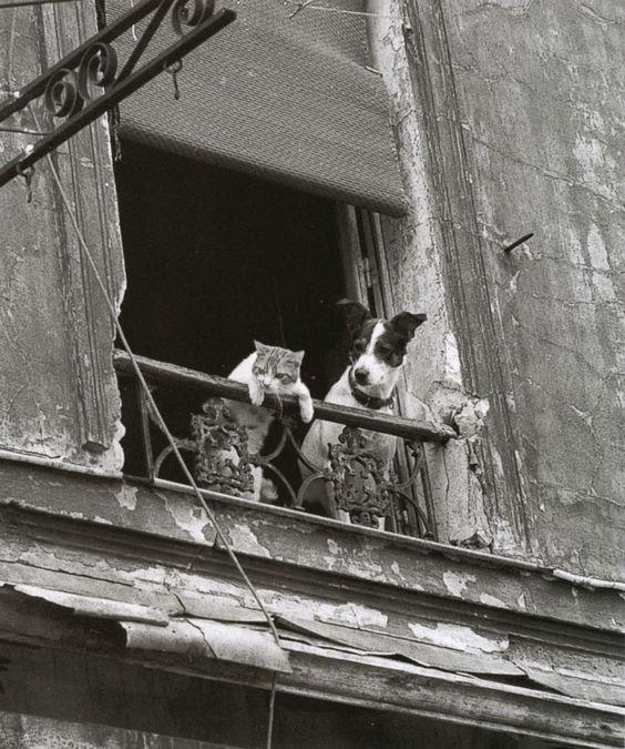 cat-and-dog-on-balcony